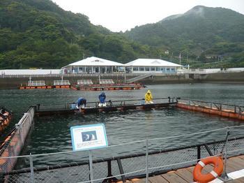 生け簀越しに見るイルカ島(左)とつくみマルシェ(右).jpg